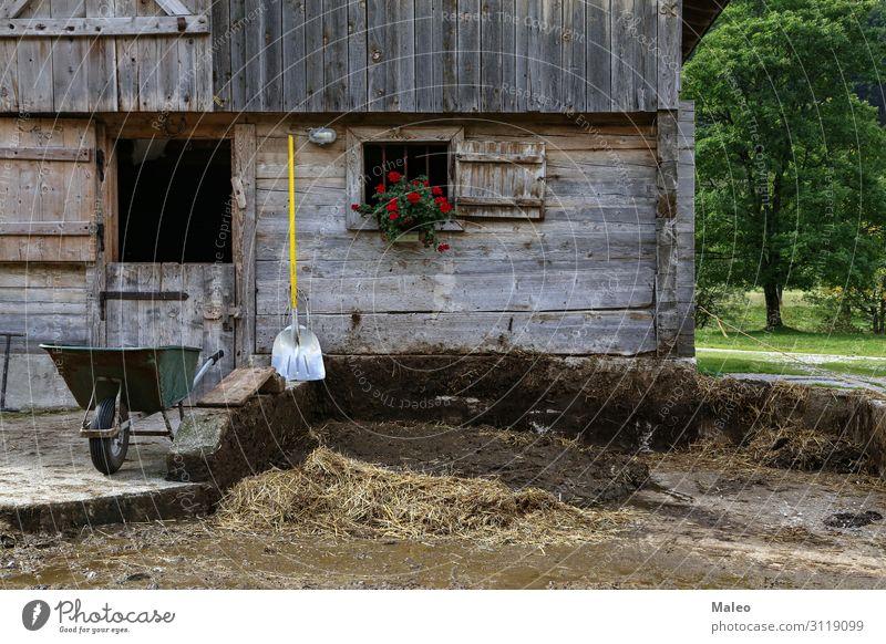 Bauernhof ländlich Dorf Garten Haus Häusliches Leben Landschaft Grundbesitz Hütte Kuh Wirtschaft Säugetier Haushaltsführung Vieh Karre Scheune Misthaufen