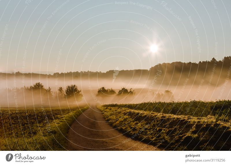 Als ich mal früh aufstand ... Umwelt Natur Landschaft Urelemente Erde Luft Himmel Wolkenloser Himmel Sonnenaufgang Sonnenuntergang Herbst Schönes Wetter Wiese
