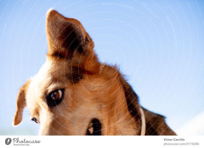 Ein glücklicher und gesunder adoptierter Hund Tier Haustier 1 Coolness Tierliebe Wahrheit Ehrlichkeit authentisch Farbfoto Textfreiraum rechts Morgen