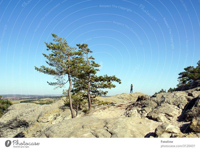 Hoch hinaus Mensch feminin Junge Frau Jugendliche 1 Umwelt Natur Landschaft Pflanze Urelemente Erde Himmel Wolkenloser Himmel Sommer Baum Wildpflanze Felsen