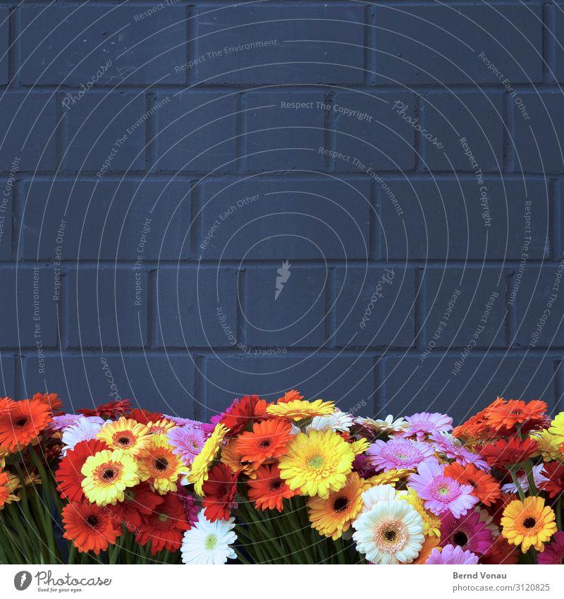 Graubunt Pflanze Blume Haus Mauer Wand Fassade Kitsch verrückt Kunstblume Mauerstein Dekoration & Verzierung Feste & Feiern Anlass mehrfarbig Blüte Fröhlichkeit