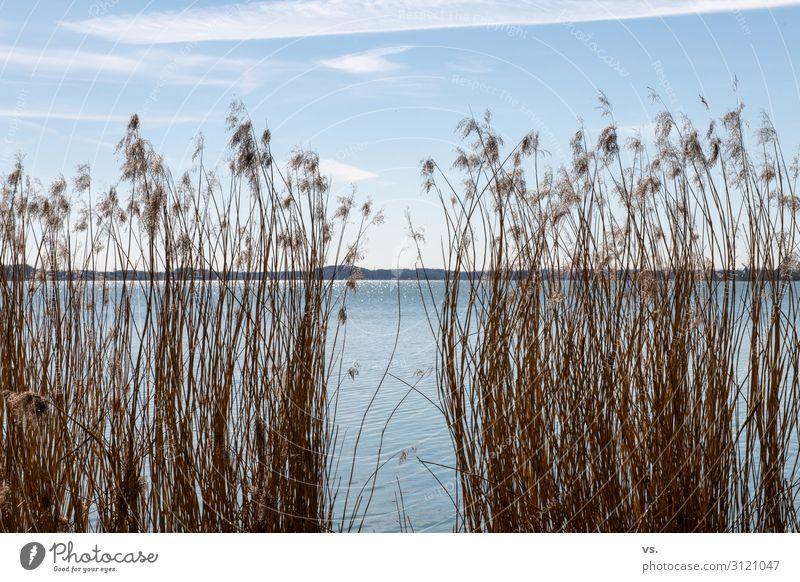 Gestrüpp mit Wasser und Himmel Umwelt Natur Landschaft Sonne Sonnenlicht Frühling Schönes Wetter Gras Sträucher Wildpflanze Seeufer Flussufer Schwimmen & Baden