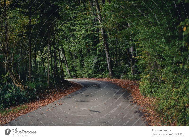Straße im Herbst Umwelt Natur Landschaft Wolken Baum Blatt Wald Wege & Pfade wandern grau grün Farbfoto Gedeckte Farben Außenaufnahme Menschenleer