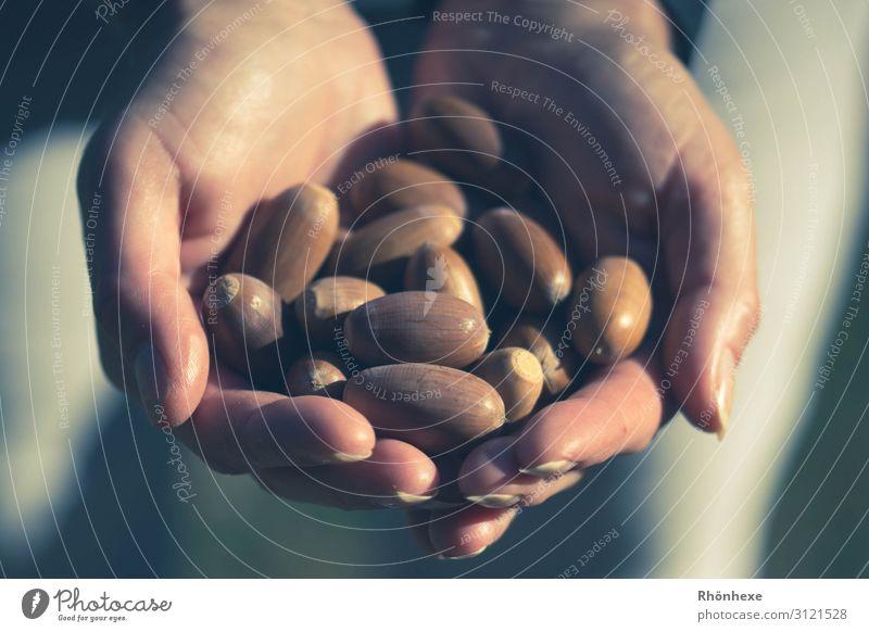 Keeping autumn in your hands Mensch Hand Finger 1 Natur festhalten braun Glück Herbst Eicheln herbstlich Außenaufnahme Sammlung Futter Farbfoto Makroaufnahme