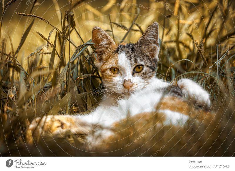 Katze aus Alanya Tier Haustier Wildtier Tiergesicht Fell Krallen Pfote Fährte 1 Tierjunges beobachten füttern Spielen gelb gold orange Wildkatze Katzenbaby