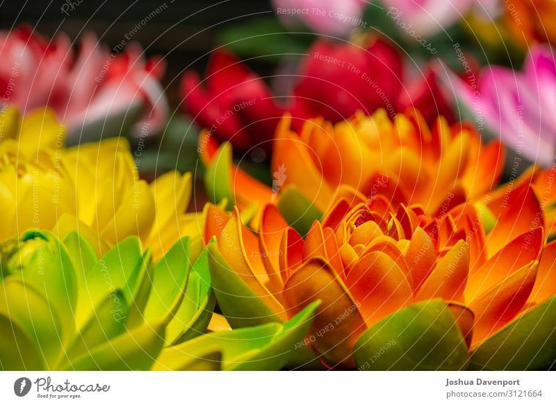 Lotusblume Ferien & Urlaub & Reisen Tourismus Pflanze Blume schön Asien China farbenfroh bunte Blume Jokhang-Tempel Lhasa Das Wahrzeichen von Lhasa lhasa tibet
