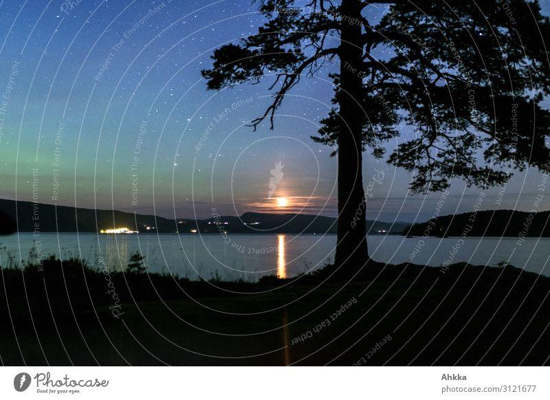 Nordlicht und Mondlicht Natur Nachthimmel Stern Horizont Baum Seeufer Mondschein Norwegen glänzend leuchten exotisch fantastisch gigantisch natürlich blau