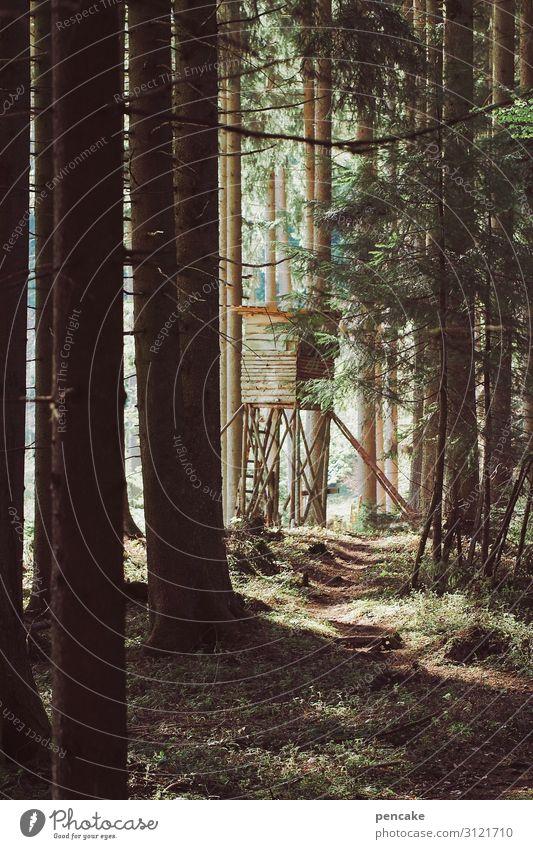 trojaner Jagd Natur Landschaft Wald beobachten wandern verstecken Tarnung Hochsitz Waldspaziergang Fußweg Farbfoto Außenaufnahme Abend Sonnenlicht