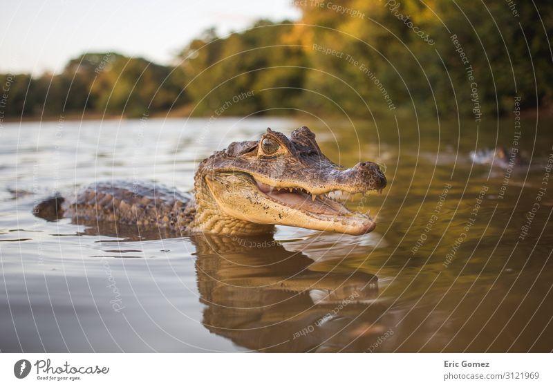 Natur Sommer schön grün Wasser Tier Tierjunges Glück Schwimmen & Baden Freundschaft Kommunizieren Lächeln Neugier Seeufer Flussufer exotisch