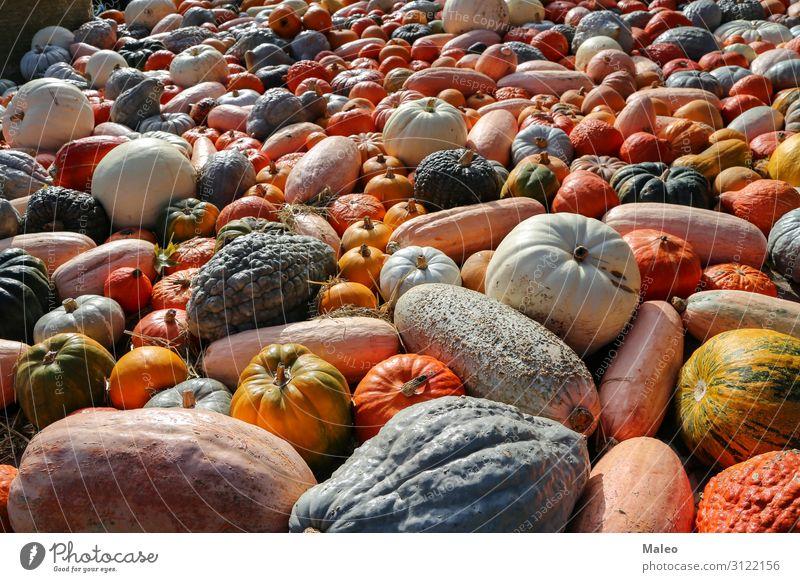 Frische Biokürbise auf einem Agrarmarkt des im Herbst Basar Bioprodukte Biologische Landwirtschaft mehrfarbig Essen zubereiten Bauernhof Lebensmittel frisch