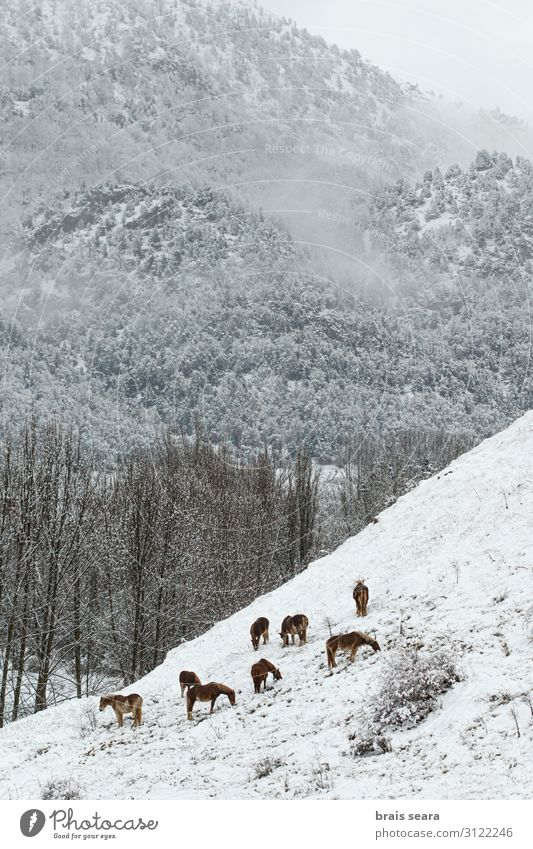 Ferien & Urlaub & Reisen Natur Weihnachten & Advent schön weiß Landschaft Baum Wolken Tier ruhig Wald Winter Berge u. Gebirge Umwelt Schnee Schneefall