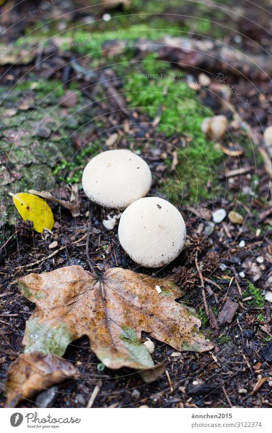 Herbst im Wald Blatt Natur Pilz Moos grün weiß braun Regen Spaziergang Fund finden sammeln
