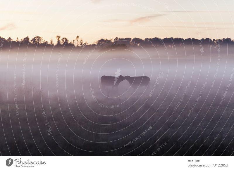 Tierliebe Natur Gesundheit Lebensmittel Wiese Glück Zusammensein Ernährung frisch Nebel Idylle Klima Landwirtschaft Zusammenhalt Weide rein