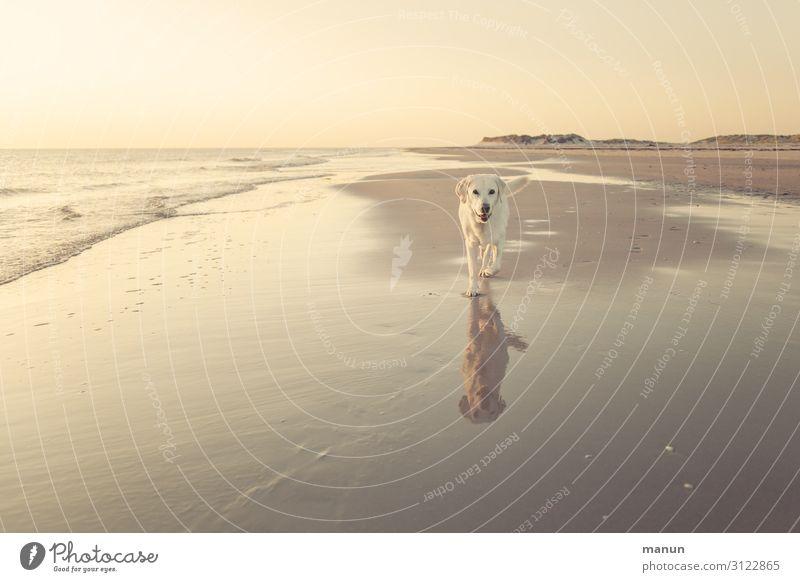 Große Freiheit Lifestyle Ferien & Urlaub & Reisen Strand Meer Familie & Verwandtschaft Freundschaft Leben Landschaft Schönes Wetter Küste Nordsee Haustier Hund