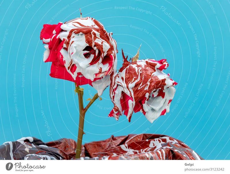 Gebeizte rote Rosen mit Farbe Garten Dekoration & Verzierung Feste & Feiern Hochzeit Geburtstag Natur Pflanze Blume Blatt Blüte Liebe blau grün weiß Romantik