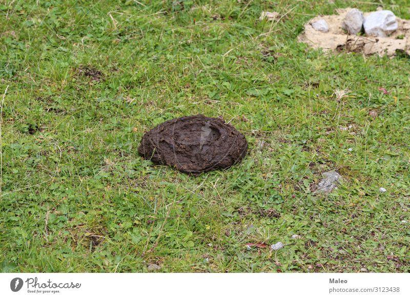 Ein Kuhkuchen im Gras Landwirtschaft Hintergrundbild Vieh Misthaufen Bauernhof Düngung Feld grün Natur natürlich organisch Kot Tier braun dreckig Haufen Bulle