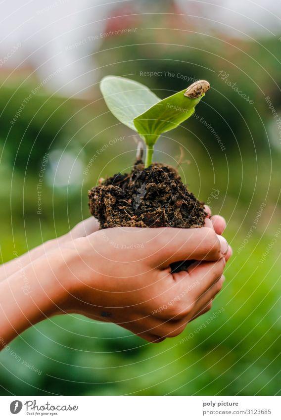 Hand eines Kindes hällt junge Pflanze Ferien & Urlaub & Reisen Jugendliche Sommer Lifestyle Leben Umwelt Garten Zufriedenheit Freizeit & Hobby 13-18 Jahre Erde