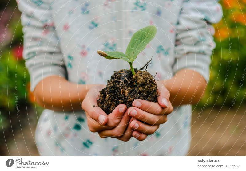 Mädchen Hand hält Kürbis-Setzling Ferien & Urlaub & Reisen Natur Jugendliche Sommer 18-30 Jahre Lifestyle Erwachsene Leben Religion & Glaube Umwelt