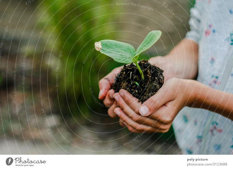 Kinderhand hällt junge Pflanze Ferien & Urlaub & Reisen Natur Jugendliche Hand Mädchen Lifestyle Leben Umwelt Freizeit & Hobby 13-18 Jahre Erde Wachstum