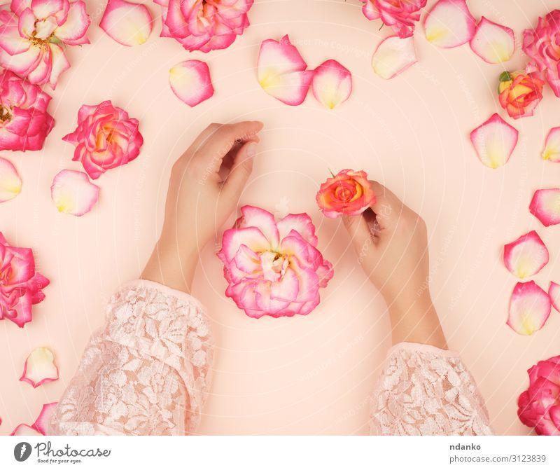 zwei weibliche Hände mit glatter Haut elegant schön Körper Kosmetik Behandlung Spa Sommer Feste & Feiern Hochzeit Mensch Frau Erwachsene Hand Natur Pflanze