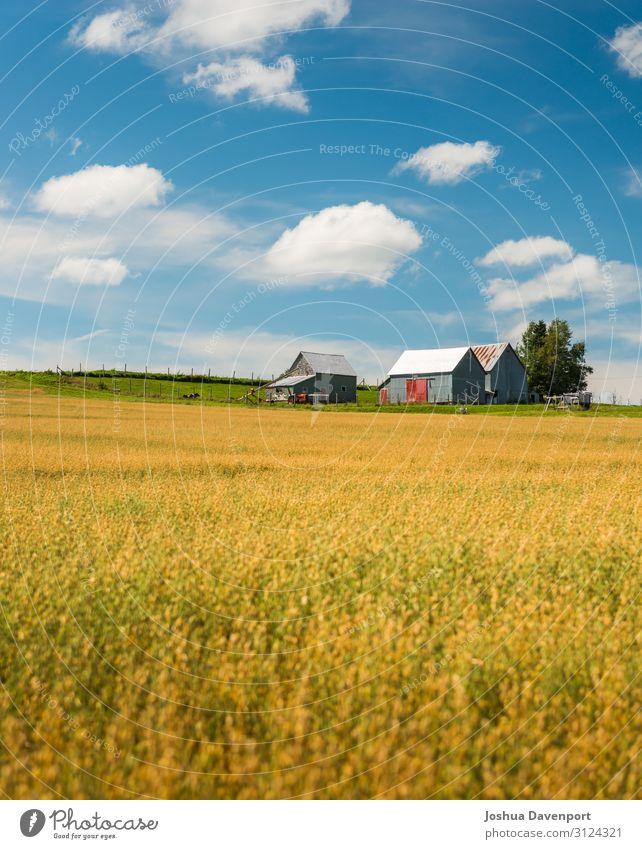 Felder aus Gold Landschaft Nutzpflanze schön Ackerbau Atlantik-Kanada atlantische Provinzen kanadische Landschaft Feldfrüchte Bauernhof Lebensmittel Korn Ernte