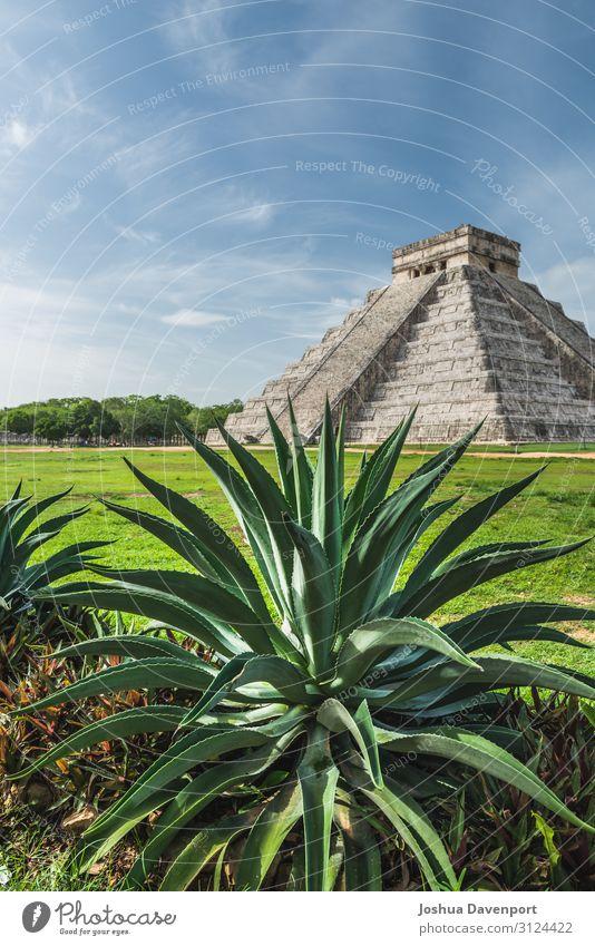 Pyramide von Kukulkanisch Ferien & Urlaub & Reisen Sightseeing Ruine alt Aloe Aloe Pflanze antik altes Gebäude Mittelamerika Chichén Itzá Wahrzeichen Maya