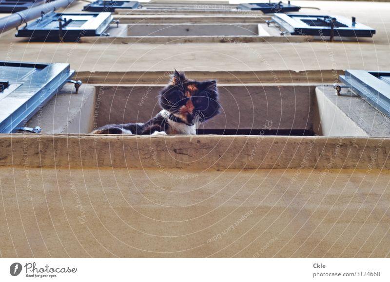 Ohne Worte Katze blau Haus Tier Fenster Wand Stil Gebäude Mauer braun Fassade Häusliches Leben Kraft beobachten bedrohlich Haustier