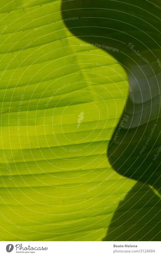 Schattenspiel - das Blattmuster Kunstwerk Natur Pflanze Sonne Sonnenlicht Schönes Wetter Grünpflanze Garten Park Ornament wählen beobachten entdecken leuchten
