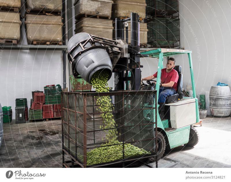 Olivenarbeiter am Gabelstapler Frucht Arbeit & Erwerbstätigkeit Beruf Arbeitsplatz Fabrik Industrie Business Unternehmen Mensch Mann Erwachsene Verkehr Fahrzeug