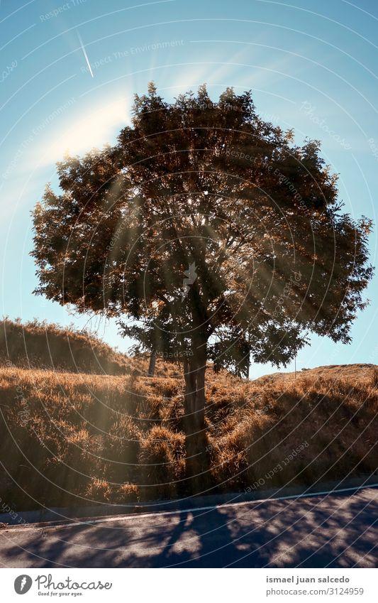 Ferien & Urlaub & Reisen Natur Landschaft rot Sonne Baum Erholung Blatt ruhig Wald Berge u. Gebirge Herbst braun Platz Ast Jahreszeiten