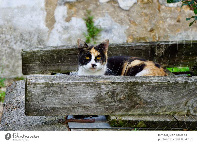 schöne streunende Katze, die in die Kamera schaut. Haustier Katzenbaby Irrläufer Straße Bartansatz Porträt Tier Kopf Auge Ohr Behaarung Hintergrund neutral