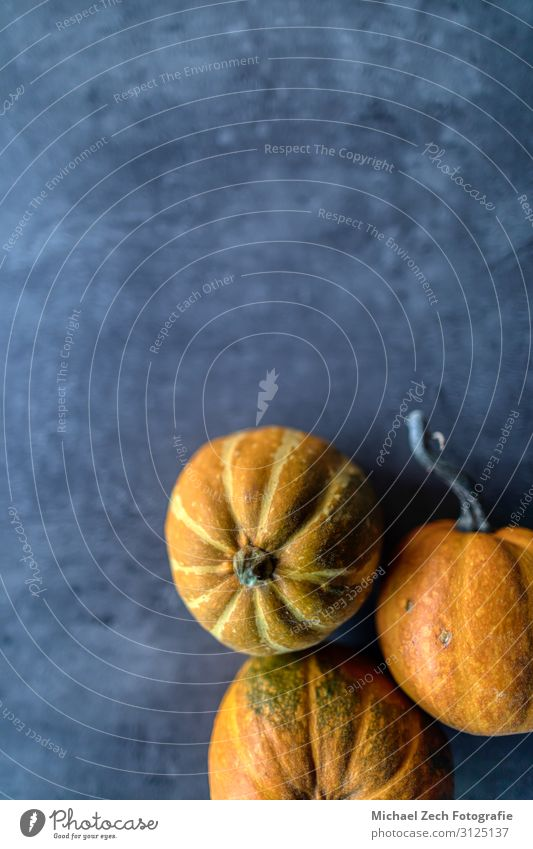 Frohes Thanksgiving, Auswahl verschiedener Kürbisse auf grauem Stein Gemüse Abendessen Design Glück Dekoration & Verzierung Tisch Feste & Feiern Erntedankfest