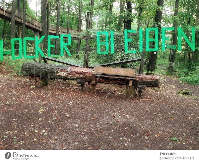 Natur-Holzbank Ausflug wandern Pflanze Erde Baum Wald gehen Neugier Interesse Bewegung entdecken Erholung Lebensfreude Wege & Pfade Farbfoto mehrfarbig