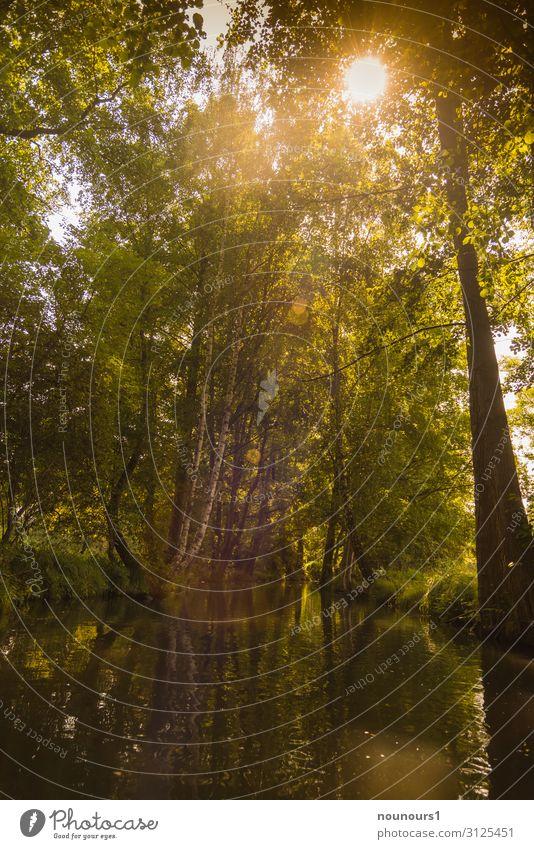 Sommerlicht Umwelt Natur Landschaft Tier Wasser Himmel Sonne Sonnenlicht Klima Klimawandel Schönes Wetter Pflanze Baum Urwald Bach fantastisch natürlich braun