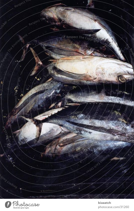 this is fish Ernährung Fisch Gastronomie Frankreich Fischmarkt