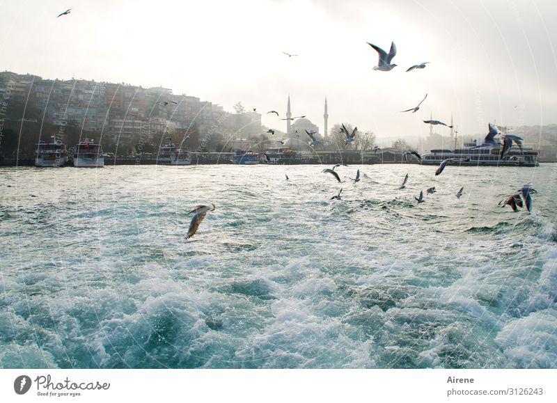 viel Bewegung am Bosporus II Ferien & Urlaub & Reisen blau weiß Meer Küste fliegen hell Nebel Wellen glänzend Fröhlichkeit Lebensfreude Schönes Wetter
