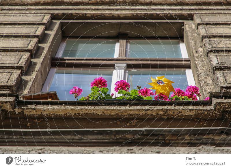 Blumen vorm Fenster Pflanze Topfpflanze Prenzlauer Berg Stadt Hauptstadt Altstadt Menschenleer Haus Bauwerk Gebäude Architektur Mauer Wand Fassade