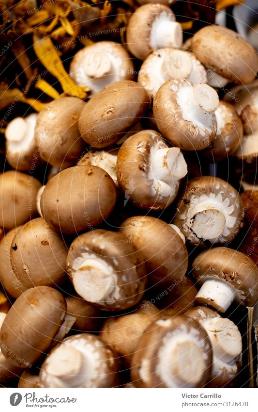 Lebensmittel authentisch Gemüse Bioprodukte Vegetarische Ernährung Abendessen Mittagessen