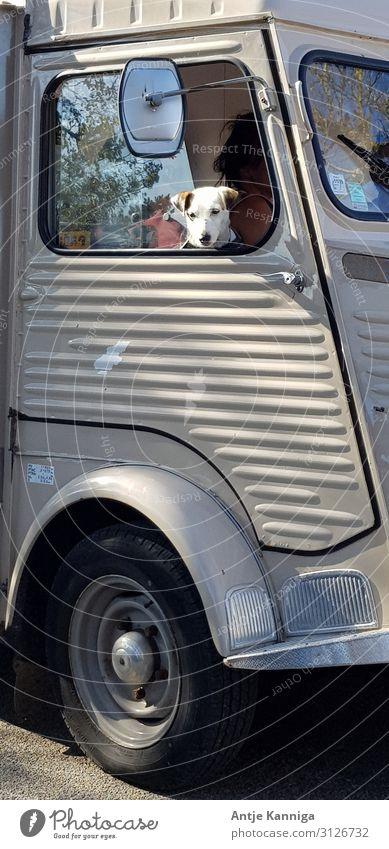 Hund im Autofenster Ferien & Urlaub & Reisen Camping Verkehrsmittel Autofahren Wohnmobil Oldtimer Haustier 1 Tier Abenteuer entdecken erleben Freizeit & Hobby