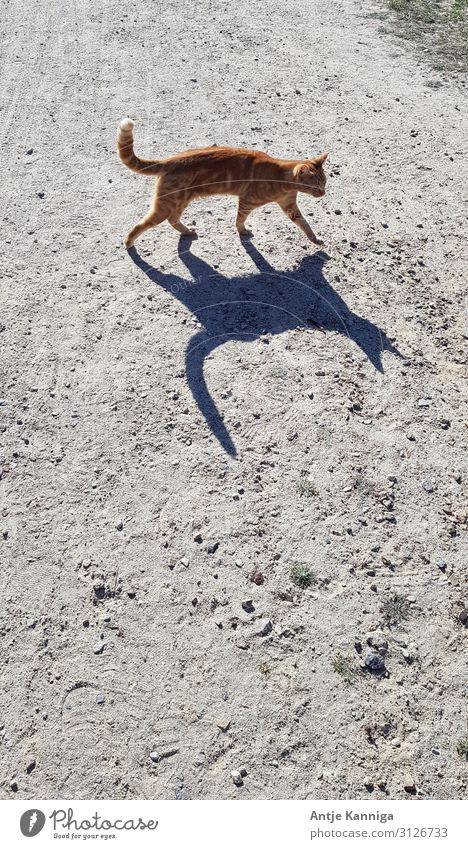 Katze mit Schatten Sand Sonnenlicht Schönes Wetter Wege & Pfade Tier 1 Zeichen Bewegung entdecken kuschlig Neugier wild Gelassenheit elegant