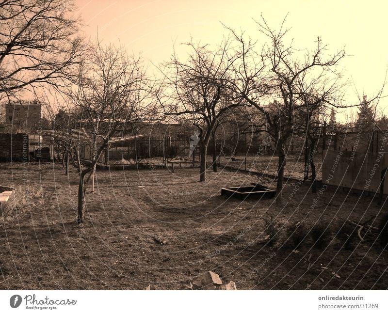 Garten Natur Baum kalt Herbst Landschaft