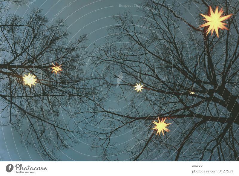 Sternbild Baum Nachthimmel Winter Zweige u. Äste Herrnhuter Sterne Dekoration & Verzierung Weihnachtsstern Holz Kunststoff Zeichen hängen leuchten dunkel hell