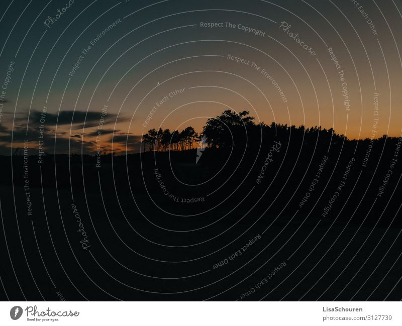 mind blowing Natur Landschaft Himmel Wolken Nachthimmel Sonnenaufgang Sonnenuntergang Sommer Baum Wildpflanze Wald Menschenleer Vertrauen schön dankbar