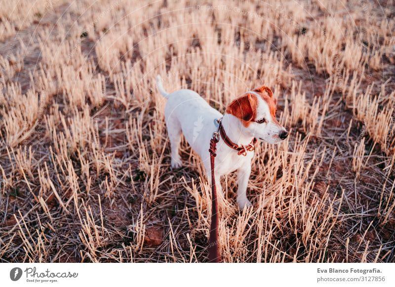Natur Hund Sommer schön weiß Landschaft Erholung Tier Freude Gesundheit Lifestyle Herbst gelb Liebe Frühling natürlich