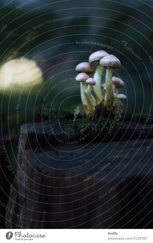 tief im walde Umwelt Natur Herbst Moos Wildpflanze Baumstumpf Waldpflanze Pilz dunkel Zusammensein natürlich braun grün Stimmung Waldstimmung geheimnisvoll Team