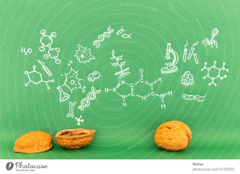 Concept of biology in a nutshell Studium Labor grün weiß Hintergrundbild Grafische Darstellung Grafik u. Illustration Symbole & Metaphern Biologie Biochemie