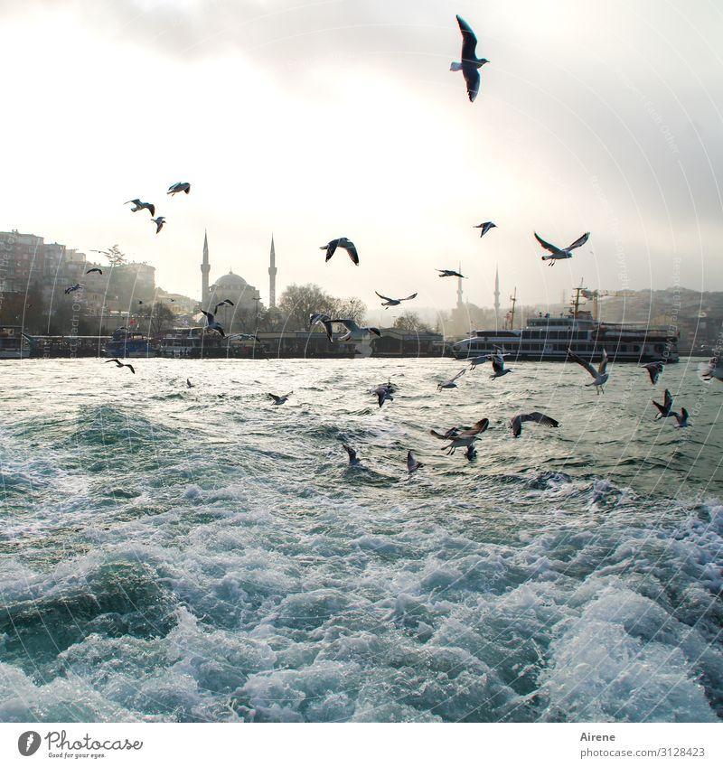 Wildwasser Urelemente Wasser Himmel Schönes Wetter Nebel Wellen Meer Gischt Istanbul Bosporus Skyline Hafen Moschee Wasserstraße Fähre Wasserfahrzeug Möwe