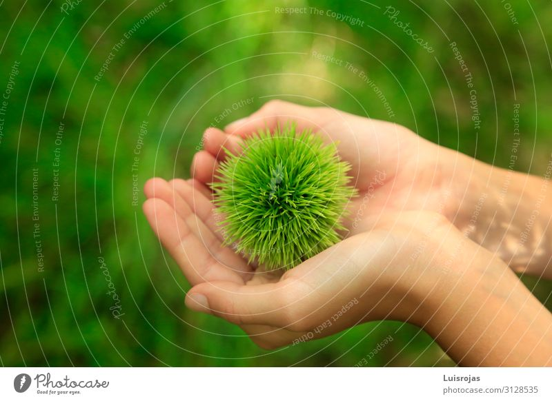 Kinderhände mit grünem Igel auf dem Feld Schachmatt Gesundheit Freizeit & Hobby Abenteuer Umwelt Natur Pflanze exotisch Wald Farbfoto Außenaufnahme