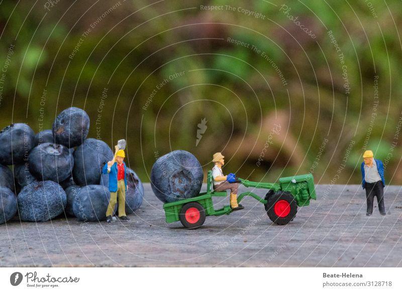 Drei Erntehelfer organisieren mit Schaufeln und Bagger die Einbringung der Ernte überdimensionaler Heidelbeeren Spielzeugwelt Blaubeeren Obst Sommer gesund