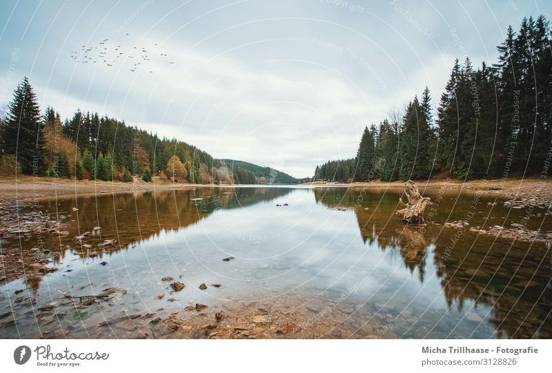 See im Herbst Ferien & Urlaub & Reisen Camping wandern Natur Landschaft Wasser Himmel Wolken Sonnenlicht Baum Wald Erholung natürlich blau braun gelb grün